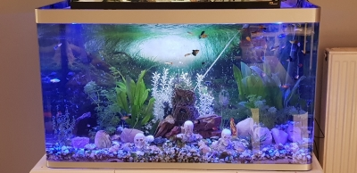 Photo 2 aquarium 244L